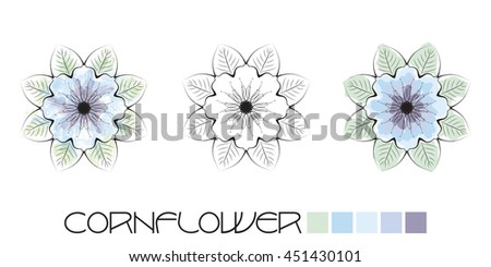 Stylized Cornflower colouring, page with watercolour and flat colour examples and a black and white option to complete yourself.  - stock photo