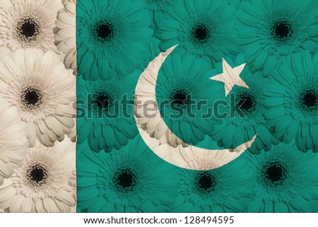stylized national flag of pakistan with gerbera daisy flowers as concept and symbol of love, beauty, innocence, and positive emotions - stock photo