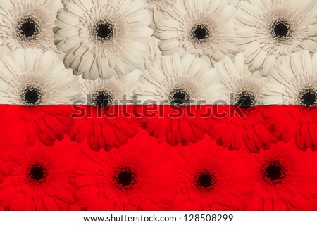 stylized national flag of poland with gerbera daisy flowers as concept and symbol of love, beauty, innocence, and positive emotions - stock photo