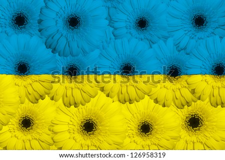 stylized national flag of ukraine with gerbera daisy flowers as concept and symbol of love, beauty, innocence, and positive emotions - stock photo