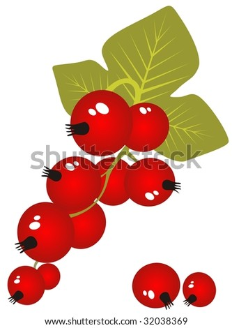 Stylized red currant isolated on a white background.