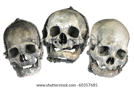 Stylized skulls in Halloween theme - stock photo