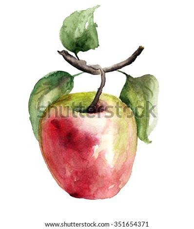 Stylized watercolor apple illustration - stock photo