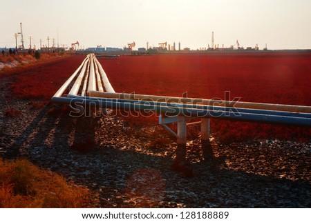 suaeda and oil industry - stock photo