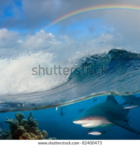 submerged image seaview with ocean breaking rough wave and rainbow above it and underwater part with coral reef and dangerous predator bullshark - stock photo