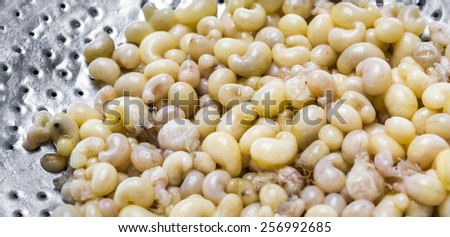 subterranean ant egg on iron plate  in the market at Chiang Mai Thailand . - stock photo