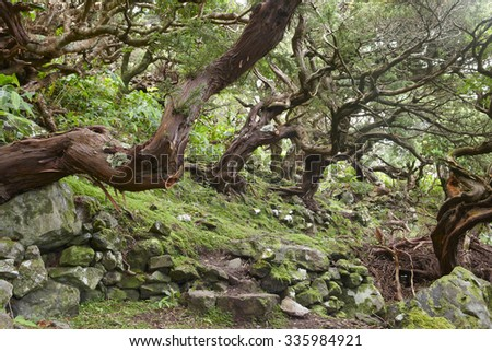 Subtropical green forest in Flores island, Azores archipelago. Portugal. Horizontal