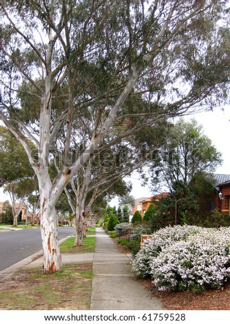 suburban street in australia - stock photo