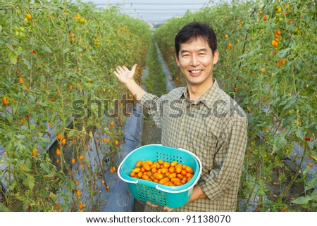 successful asian farmer holding tomato on his farm - stock photo