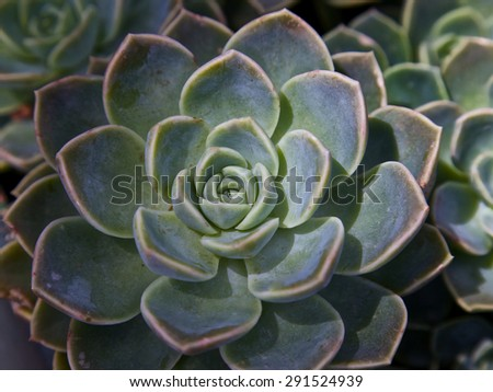 Succulent background, gardening - stock photo