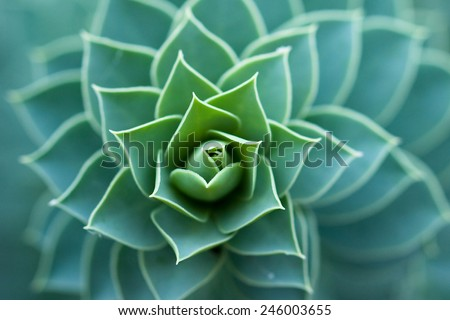 Succulent Cactus Plant In Garden - stock photo