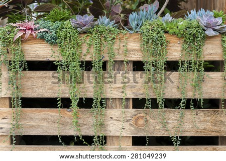 succulent flowers growing along wooden fence in traditional gard - stock photo