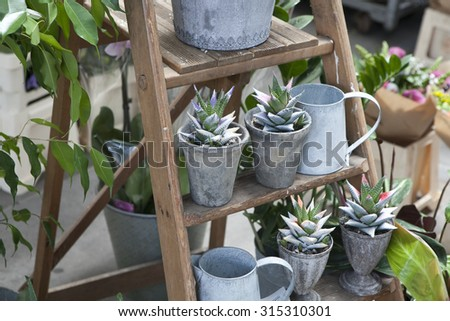 succulent for sale - stock photo
