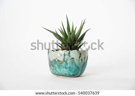 Succulent in blue planter on white
