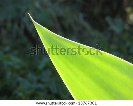 Succulent leaf closeup - stock photo