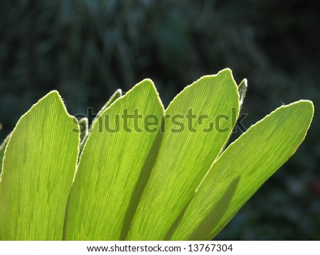 Succulent leaf group - stock photo