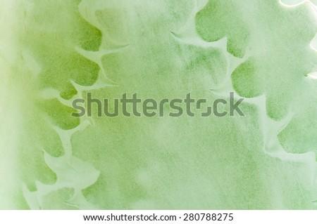 Succulent plant background - stock photo