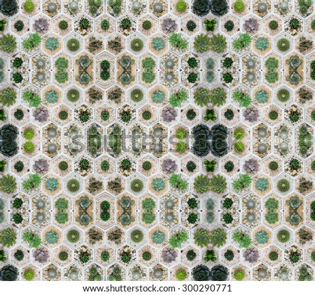 succulent plant in pot seamless pattern background - stock photo