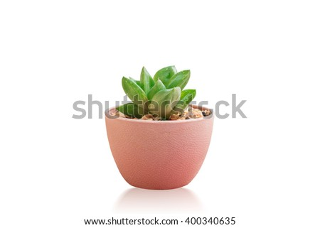 Succulent Plant Isolated on White Background with Clipping Path - stock photo