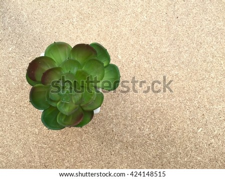 Succulent plant viewed from above on plywood background - stock photo