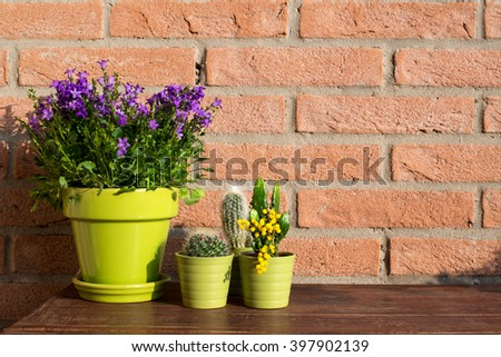 Succulent plants and violet flowers plant in green pots - brick wall background - stock photo