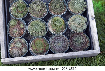 Succulent plants in a flower box - stock photo