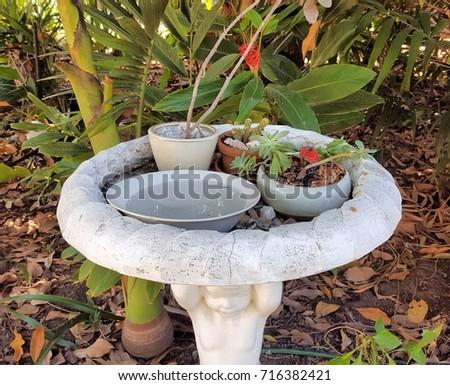 Succulent Plants On Top Of White Bird Bath In Garden.