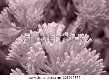 Succulent plants - Tenerife, Spain - stock photo