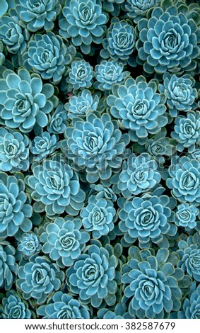 Succulents - stock photo