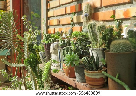 Succulents And Cactus In Different Pots ,Outdoor Cactus Garden ,Cactus And  Succulents Collection In