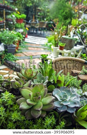 Succulents blossom in a garden.Selective focus.   - stock photo