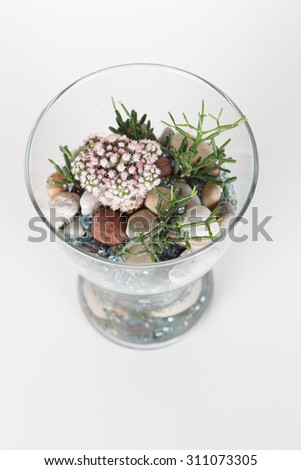 Succulents growing in a glass vase on white background - stock photo