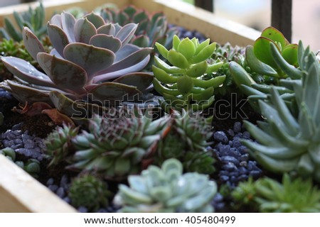 Succulents growing in the ground. Various cactus - stock photo