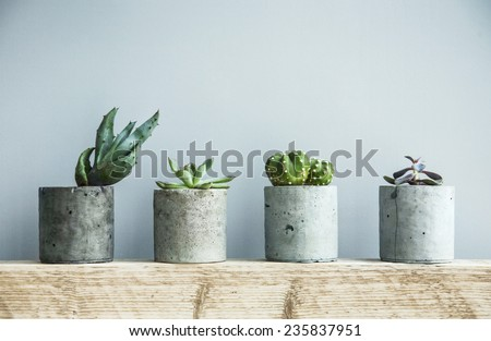 Succulents in diy concrete pot. Scandinavian room interior decoration - stock photo