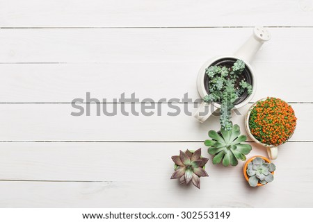 Succulents. Top view - stock photo