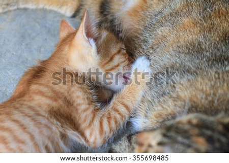 Sucking milk little cute kittens with their mother cat - stock photo