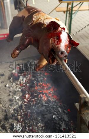 suckling pig - stock photo