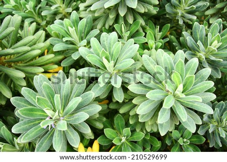 Suculent Plants close up, natural green, floral background - stock photo