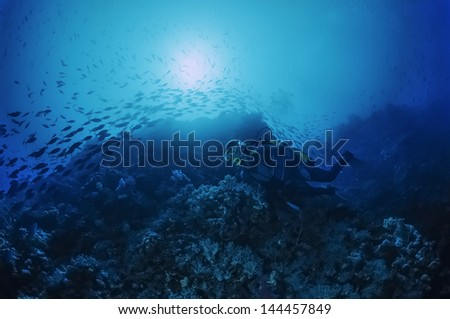 SUDAN, Red Sea, U.W. photo, Reef Wall diving - FILM SCAN - stock photo