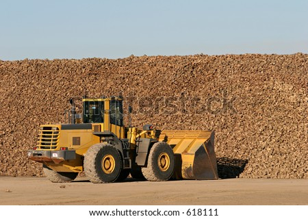 sugar beet being moved by bulldozer to a nearby processing plant - stock photo