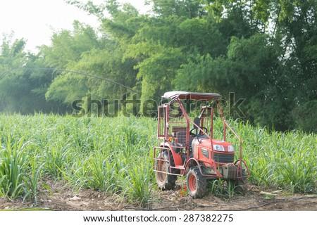 Sugar cane farm with tractor. - stock photo