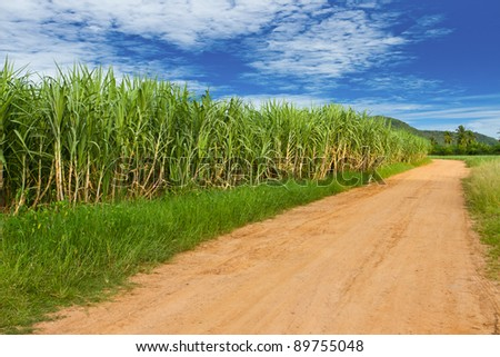 Sugar cane farmland, Tropical fruit, Thailand - stock photo