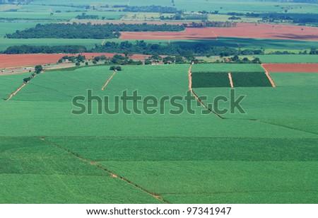 sugar-cane field - stock photo