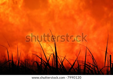 Sugar cane fire close-up - stock photo