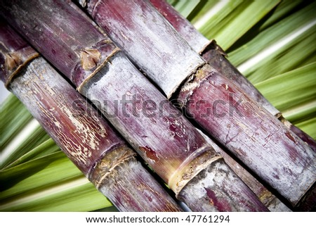 Sugar cane on a green leaf background. - stock photo