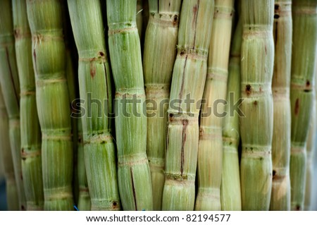 sugar cane peeled - stock photo