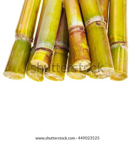 sugar cane - three pieces of fresh cut sugar cane, short stumps of sugarcane  closeup isolated on white background - stock photo