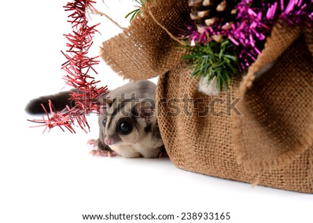 Sugar glider and Christmas tree - stock photo