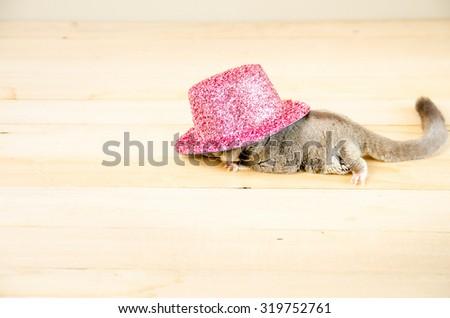 Sugar Glider in pink pink metallic party hat. - stock photo