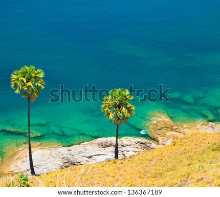 Sugar palm on island Phuket , Thailand - stock photo